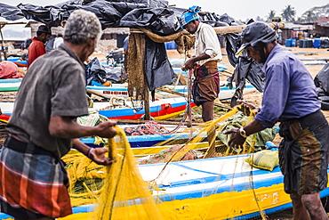 Negombo fish market (Lellama fish market), fishermen checking their catch, Negombo, West Coast, Sri Lanka, Asia