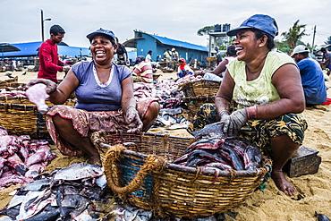 Negombo fish market (Lellama fish market), women gutting fish, Negombo, West Coast of Sri Lanka, Asia