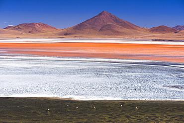 Flamingos at Red Lagoon (Laguna Colorada), a salt lake in the Altiplano of Bolivia in Eduardo Avaroa Andean Fauna National Reserve, Bolivia, South America