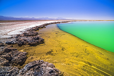 Laguna Cejar (floating salt lake lagoon), Atacama Desert, North Chile, Chile, South America