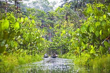 Amazon Rainforest dugout canoe ride, Sacha Lodge, Coca, Ecuador, South America