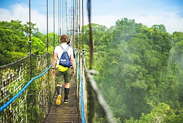 Amazon Rainforest Canopy Walk at Sacha Lodge, Coca, Ecuador, South America