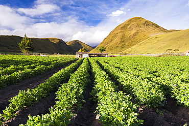 Farmland at the base of Illiniza Norte Volcano, Pichincha Province, Ecuador, South America