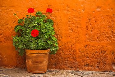 Flowers, Santa Catalina Monastery (Convento de Santa Catalina) (St. Catherine), a convent in Arequipa, Peru, South America