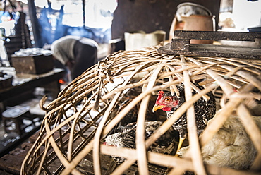 Chickens for sale at a street market in Downtown Yangon (Rangoon), Myanmar (Burma), Asia