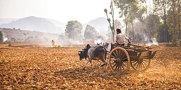 Farming between Inle Lake and Kalaw, Shan State, Myanmar (Burma), Asia - 1109-2408