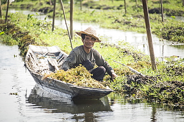 Farmers at the Floating Gardens at Inle Lake, near Nyaungshwe, Shan State, Myanmar (Burma), Asia