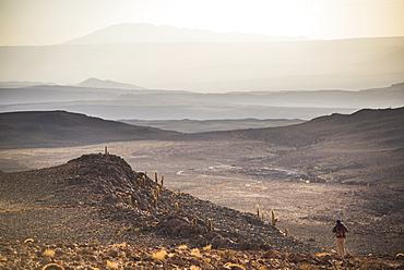 Trekking at sunset in Cactus Valley (Los Cardones Ravine), Atacama Desert, North Chile, South America