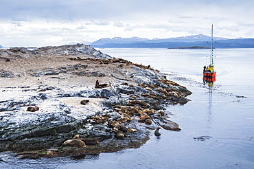 Beagle Channel sailing boat observing Sea Lion colony, Ushuaia, Tierra Del Fuego, Patagonia, Argentina, South America