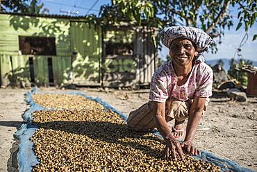 Indonesian woman sorting coffee beans, Lake Toba (Danau Toba), North Sumatra, Indonesia, Southeast Asia, Asia