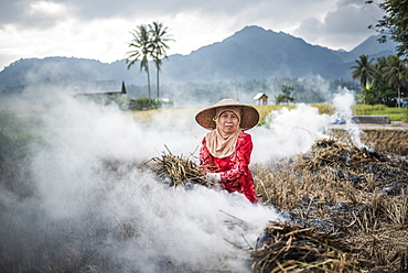 Farmer burning crops in rice paddy fields, Bukittinggi, West Sumatra, Indonesia, Southeast Asia, Asia