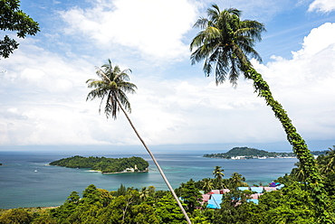 Palm tree landscape near Iboih, Pulau Weh Island, Aceh Province, Sumatra, Indonesia, Southeast Asia, Asia