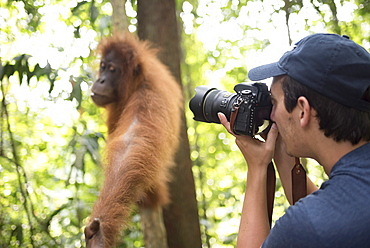Photographer taking a photo of an Orangutan in the jungle of Gunung Leuser National Park, Bukit Lawang, North Sumatra, Indonesia, Southeast Asia, Asia