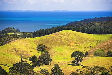 Coast near Coromandel Town, Coromandel Peninsula, North Island, New Zealand, Pacific