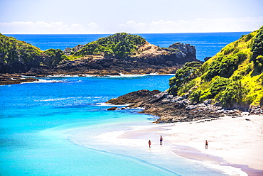 White sandy beach in the Bay of Islands, in the Waikare Inlet, visited by sailing boat from Russell, Northland Region, North Island, New Zealand, Pacific