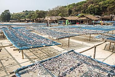 Fish drying in the fishing village at Tizit Beach, Dawei Peninsula, Tanintharyi Region, Myanmar (Burma), Asia