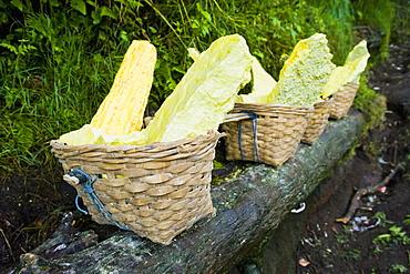 Baskets of bright yellow sulphur, Kawah Ijen, Java, Indonesia, Southeast Asia, Asia