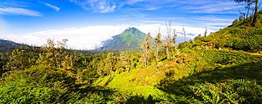 Landscape on the walk up Kawah Ijen, Java, Indonesia, Southeast Asia, Asia