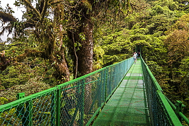 Selvatura Treetop hanging bridges, Monteverde Cloud Forest Reserve, Puntarenas, Costa Rica, Central America