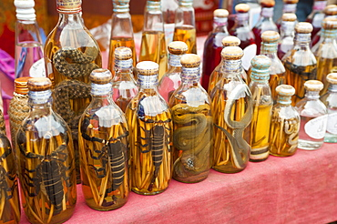 Rice wine bottles filled with lizards, Luang Prabang, Laos, Indochina, Southeast Asia, Asia