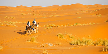 Tourist couple on a camel ride in Erg Chebbi Desert, Sahara Desert near Merzouga, Morocco, North Africa, Africa