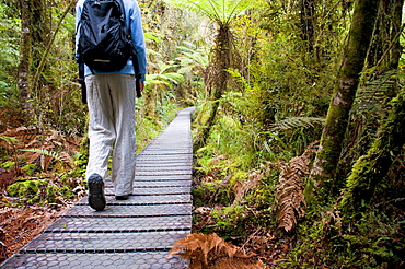 Tourist on the walkway in the forest surrounding Lake Matheson, Westland National Park, UNESCO World Heritage Site, South Island, New Zealand, Pacific