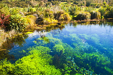 Pupu Springs (Te Waikoropupu Springs), the clearest springs in the world, Golden Bay, Tasman Region, South Island, New Zealand, Pacific