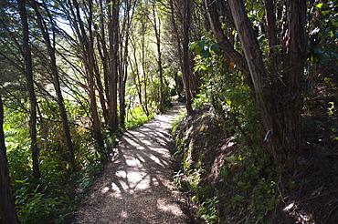 Paths in the rainforest surrounding Pupu Springs (Te Waikoropupu Springs), Golden Bay, Tasman Region, South Island, New Zealand, Pacific