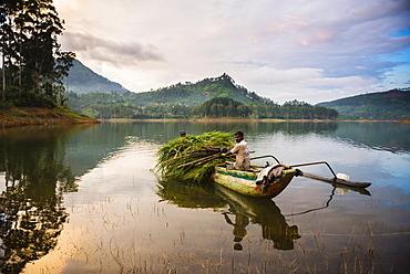 Farmers at the Maussakele Reservoir between Dalhousie and Hatton, Nuwara Eliya District, Central Highlands, Sri Lanka, Asia