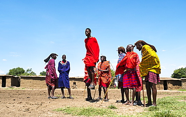 Masai Mara men perform traditional jumping to secure a bride, Masai Mara National Reserve, Kenya, East Africa, Africa