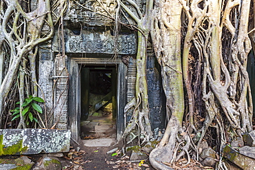 Jungle overgrowth at Ta Prohm Temple (Rajavihara), Angkor, UNESCO World Heritage Site, Siem Reap Province, Cambodia, Indochina, Southeast Asia, Asia