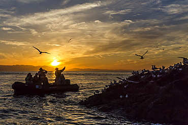Zodiac from the Lindblad Expeditions ship National Geographic Sea Bird with guests at Isla Rasita, Baja California Norte, Mexico, North America