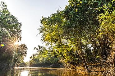 Sun coming through the forest canopy, Yanallpa Caño, Upper Amazon River Basin, Loreto, Peru, South America