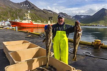 Sorting fresh caught fish in Siglufjorour, Siglufjordur, off the north coast of Iceland, Polar Regions