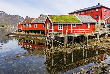 Sod roofed houses in the town of Reine, in the Lofoten Islands, Arctic, Norway, Scandinavia, Europe
