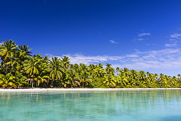 Coconut palm trees line the beach on One Foot Island, Aitutaki, Cook Islands, South Pacific Islands, Pacific