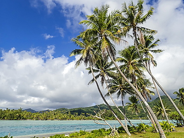 Palm lined inner lagoon of Bora Bora, Society Islands, French Polynesia, South Pacific, Pacific