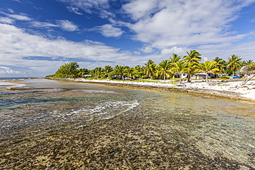 Palm trees line the beach in the front of the town of Tapana, Niau Atoll, Tuamotus, French Polynesia, South Pacific, Pacific
