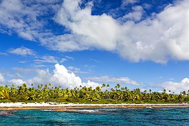 Palm trees line the beach along the shoreline of Niau Atoll, Tuamotus, French Polynesia, South Pacific, Pacific