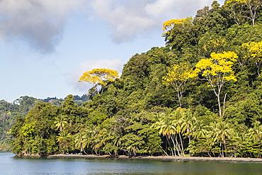 Dense forest lines the coast at Casa Orquideas Botanical Gardens, Golfo Dulce, Costa Rica, Central America