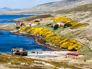 View of the Barnard Memorial Museum, front, and the Settlement in Coffin's Harbour, New Island, Falklands Islands, South America