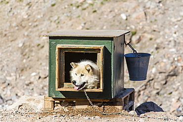 Inuit village, sled dog house, Ittoqqortoormiit, Scoresbysund, Northeast Greenland, Polar Regions
