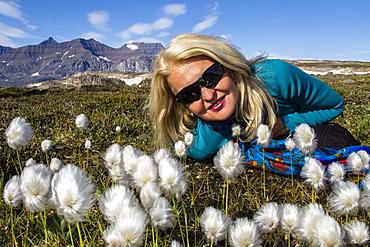 Leslie Amaral with Arctic cottongrass (Eriophorum callitrix), Heckla Haven, Northeast Greenland, Polar Regions