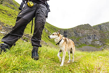 The rare, Norwegian six-toed Lundehunde, a dog used to the hunt for puffins, Vaeroya, Norway, Scandinavia, Europe