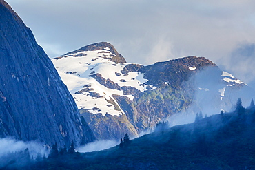 Fog in trees in Tracy Arm-Ford's Terror Wilderness area, Southeast Alaska, United States of America, North America