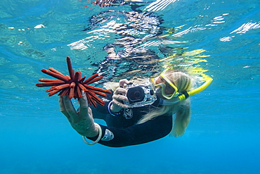 Snorkeler taking photo of urchin underwater off Maui, Hawaii, United States of America, Pacific