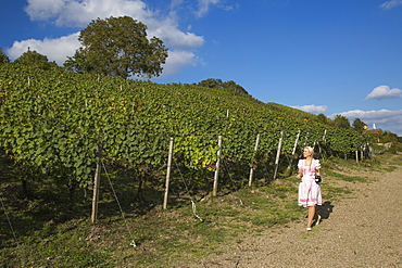 Wine princess Christina Schuhmann anear the vineyard of Weingut Dahms winery, Sennfeld, near Schweinfurt, Franconia, Bavaria, Germany