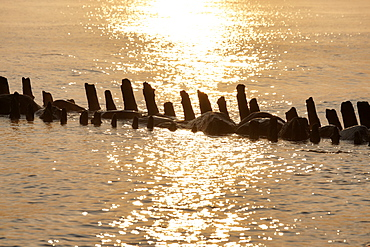 Old groynes in Kuehlungsborn West at sunrise, Seaside resort of Kuehlungsborn, Mecklenburg-Western Pomerania, Germany
