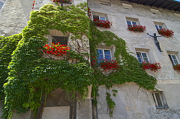 Parthenocissus tricuspidata climbing up a house wall, with germaniums in the window boxes, Bressone, Val di´Isarco, Dolomite Alps, South Tyrol, Upper Adige, Italy
