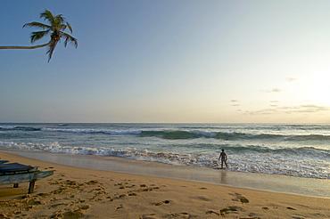 Palm tree over the beach, lonesome person on the beach in the evening, Hikkaduwa, Southwest coast Sri Lanka